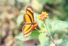 20051206231431-mariposa.jpg