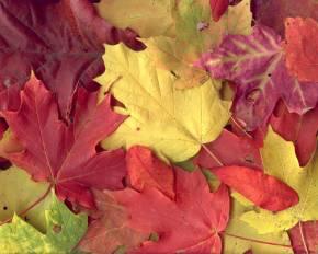 20060924204512-hojas.jpg
