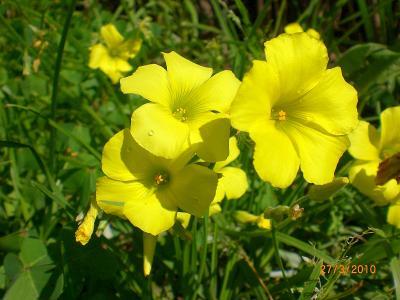 20100327221450-flores-amarillas.jpg